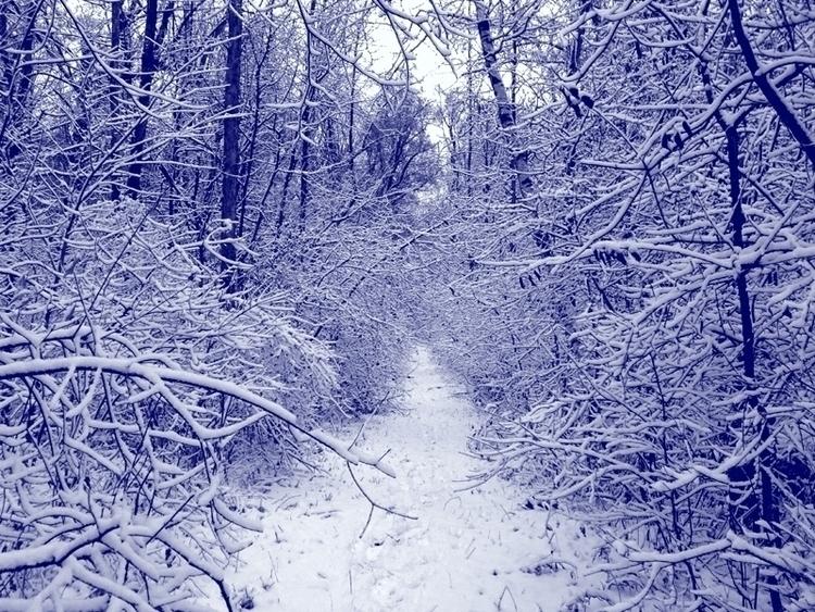 Snow // Trails - photo, winter, pleasures - dispel | ello