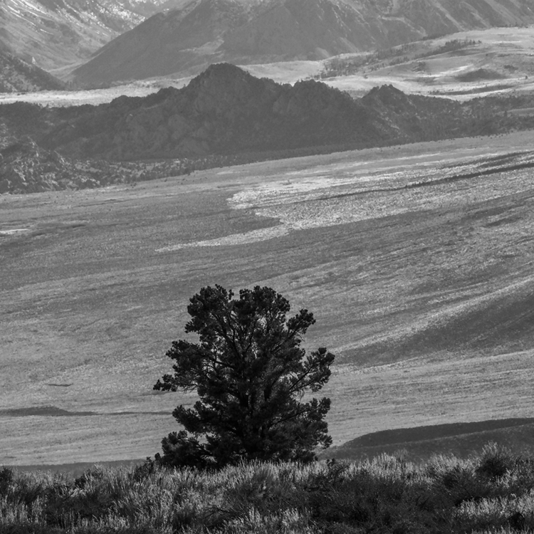 tree valley, State Highway 395 - frankfosterphotography | ello