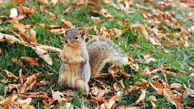 Nuts? October 2017 - squirrel, crackhead - dssken | ello