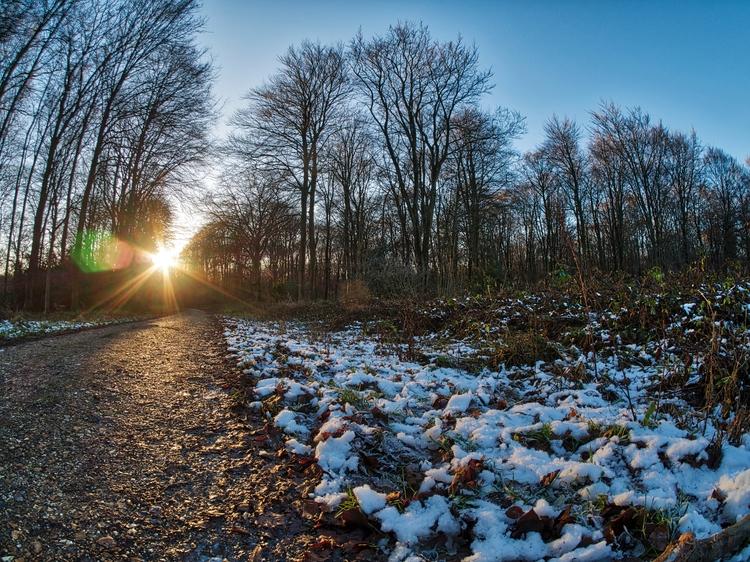 Micheldever Wood - snow ground  - neilhoward | ello