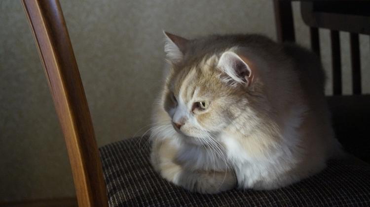 unedited - cutecats, catlovers, kitten - bunnka | ello