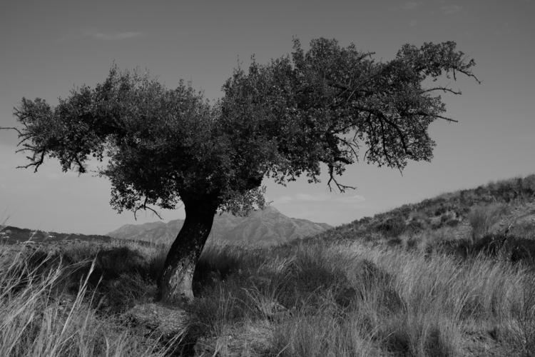 Bend fit. trees Spanish hillsid - andyflack   ello