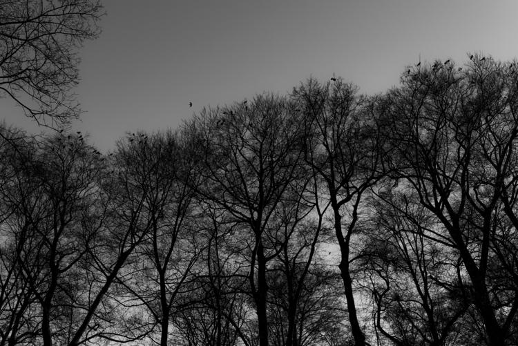 days dark haunting black crows  - christofkessemeier | ello