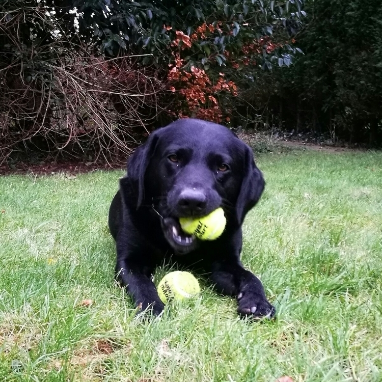 Simmy tennis balls Christmas lo - estelleclarke | ello