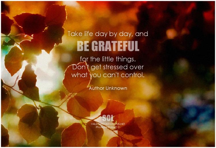 life day day, grateful stressed - symphonyoflove | ello