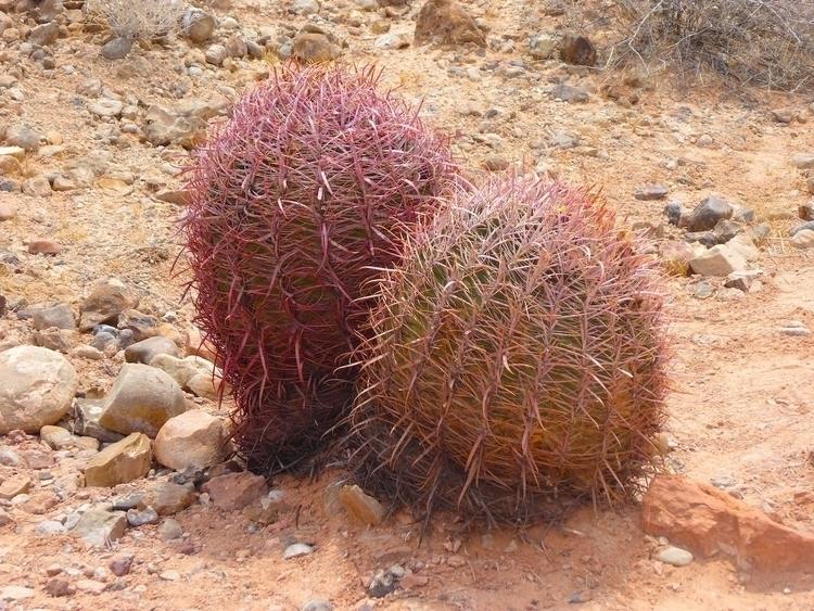 life desert | Nevada 2015 Photo - thomgollas | ello