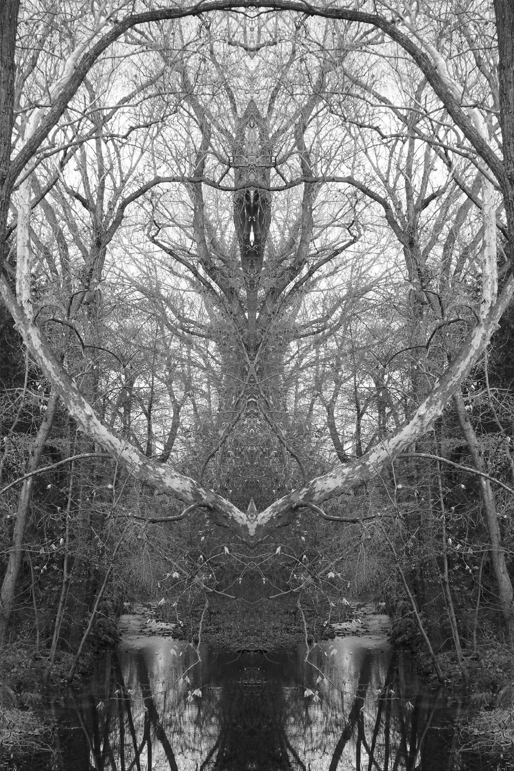 nesting ,@hatun,#naturephotogra - zygzwurx   ello