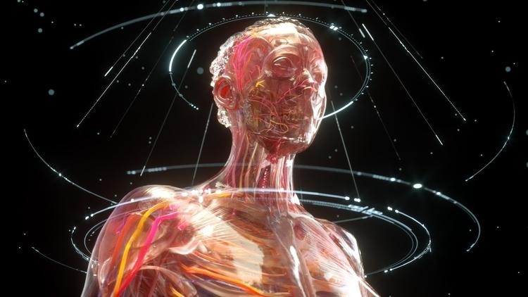 Anatomy dev Octane - C4D, octane - phoshi | ello