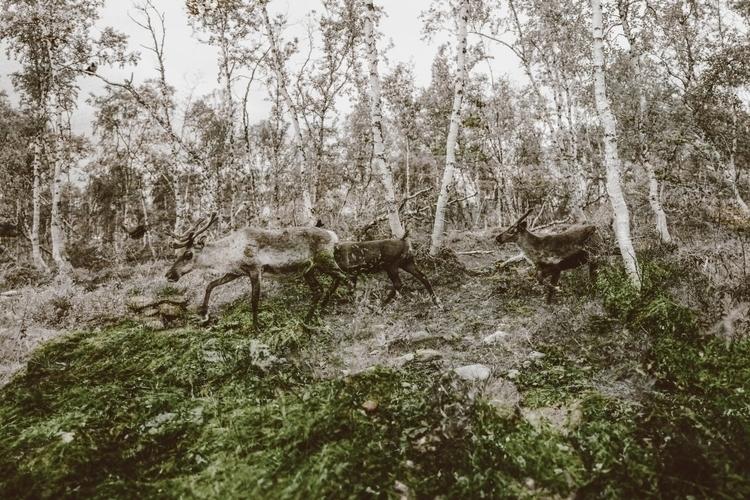 digitalphotography, nature, reindeer - takakata | ello