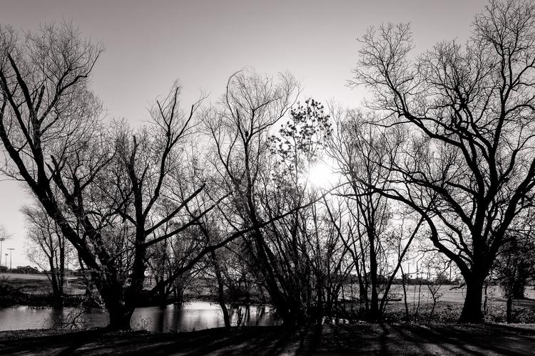 Rising Trees sun rises trees pa - mattgharvey | ello