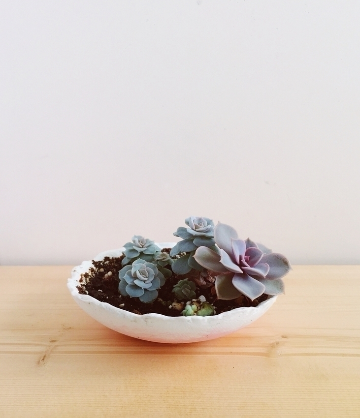 small succulent planter babies - azandairalee | ello