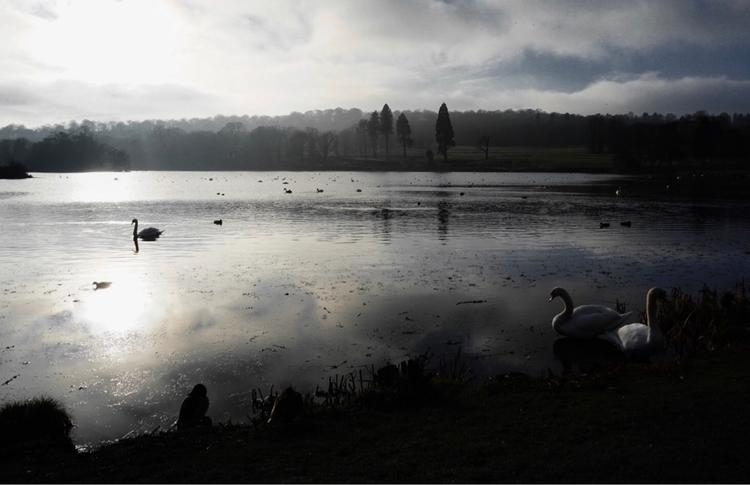Trentham lake. Winter walk fami - greyswan | ello
