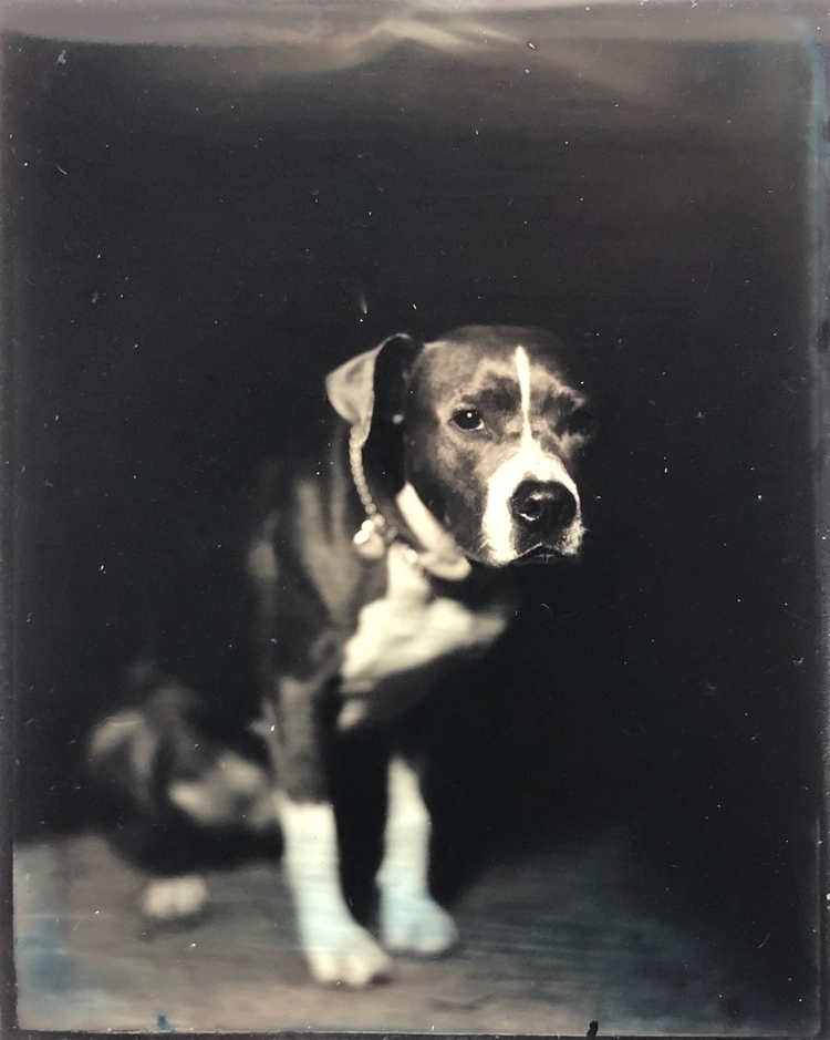 Shy Girl Lola - tintype, dog - jasonmads | ello
