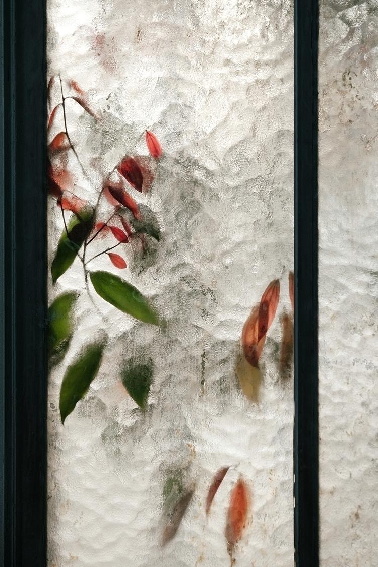 Lauraceae cinnamomum. 100 image - samuelzeller   ello