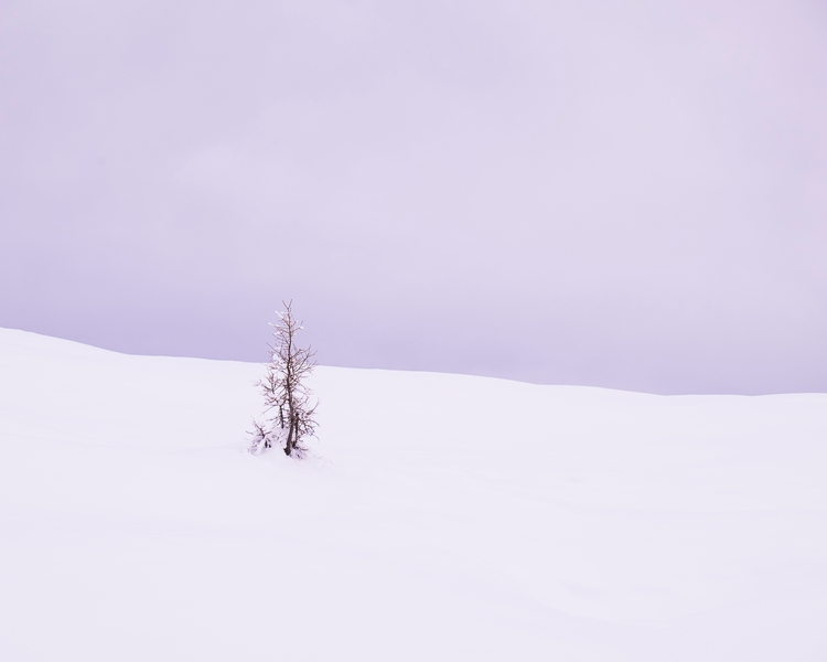 deepest snow, plant single tree - ale_x_posure | ello