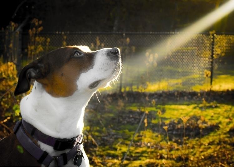 Sunny pup - therealjoestone | ello