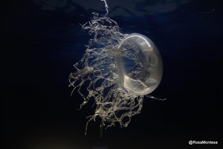 Jellyfish recycled plastic Apri - rosamontesa | ello