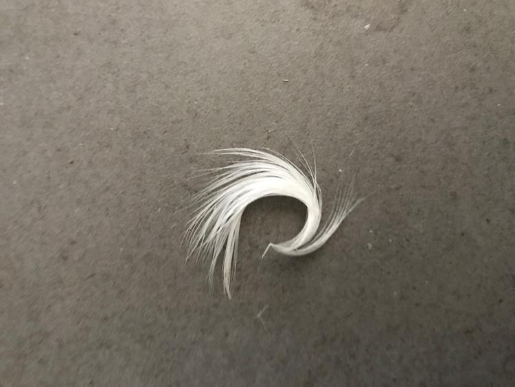 Kinda beautiful - feather, picoftheday - royfocke   ello