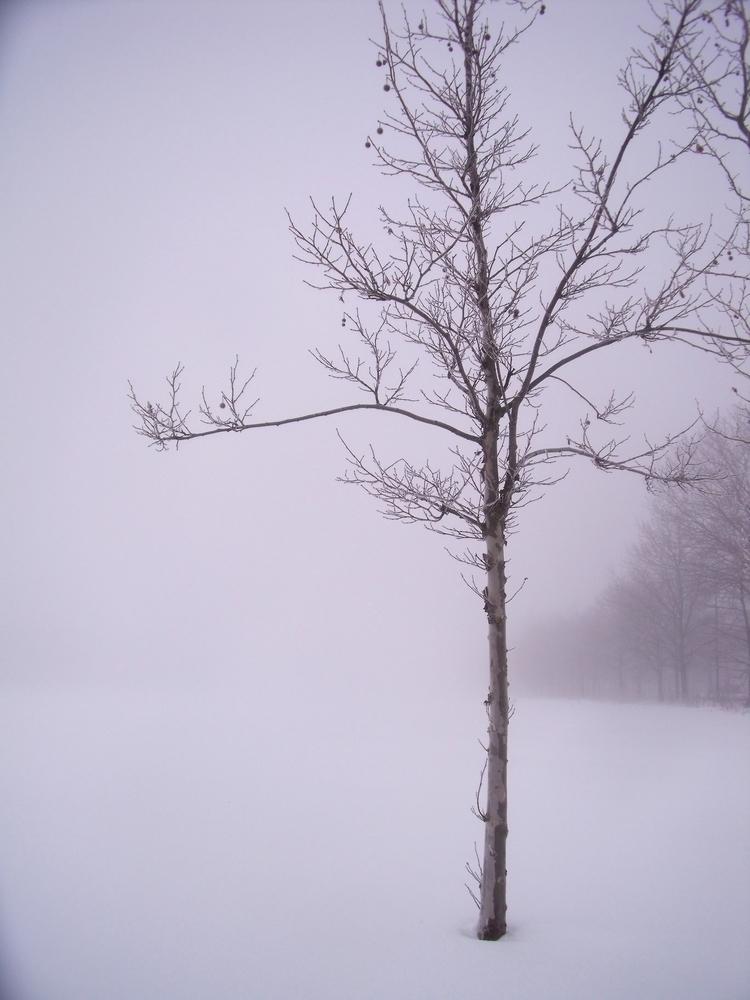 Ghost trees snow - denmark, winter - robertmclake | ello