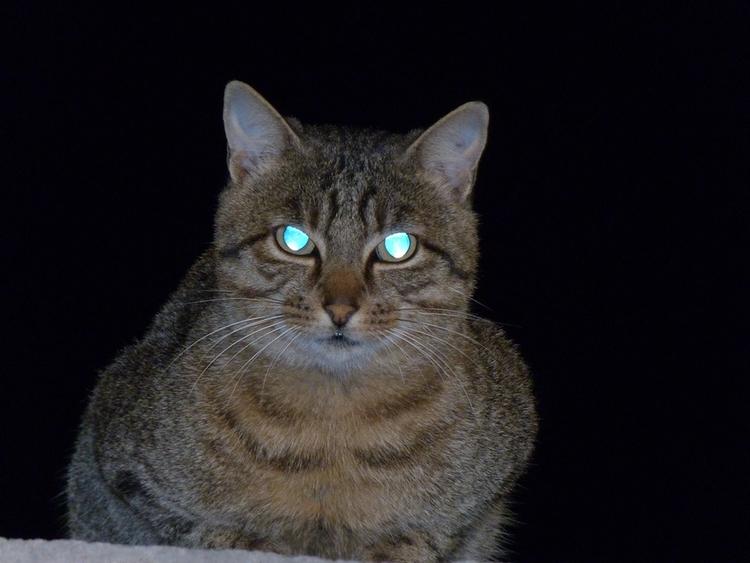 cat, katze, laser, eyes - sbulazel | ello