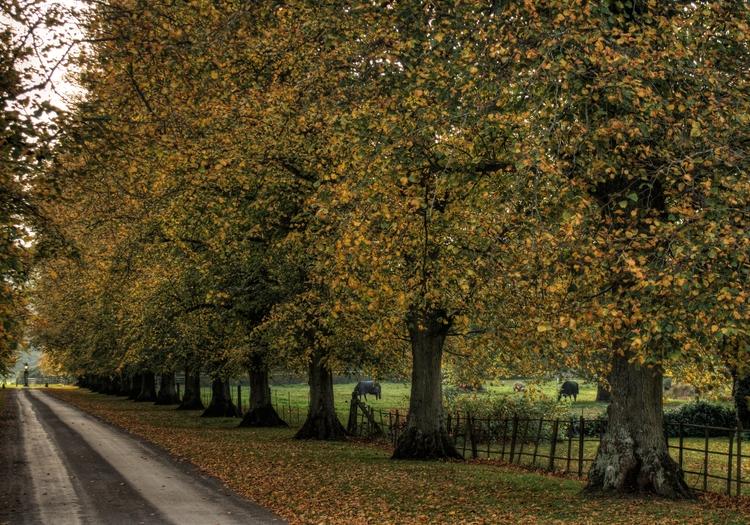 Autumn Tree Lane. drive Avingto - neilhoward | ello