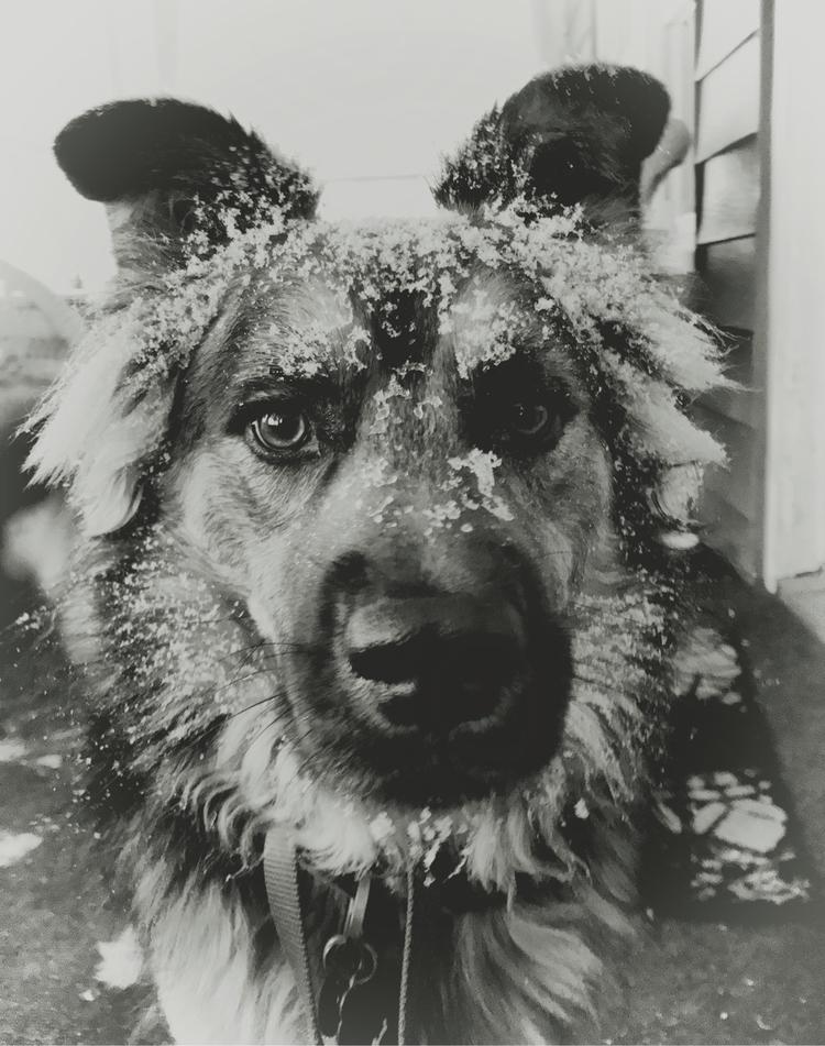 DogsOfEllo - ryanpatrick | ello