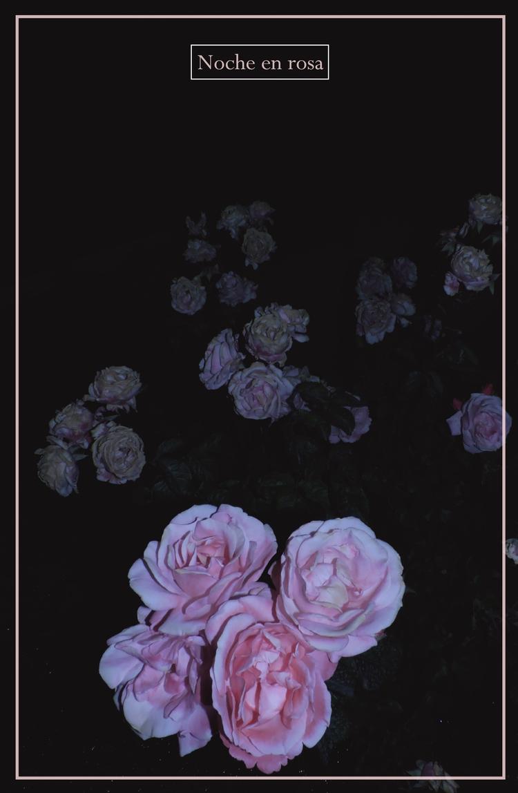 Noche en rosa - roses, night, noche - multiplicidad | ello