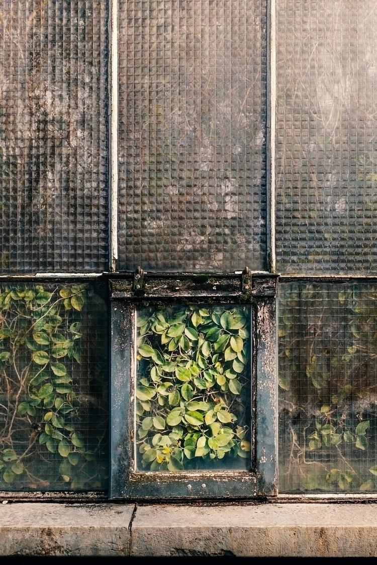 Trapped 100 images Botanical pr - samuelzeller | ello