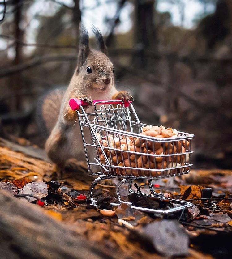 Cute Portraits Ossi Saarinen - Wildlife - photogrist | ello