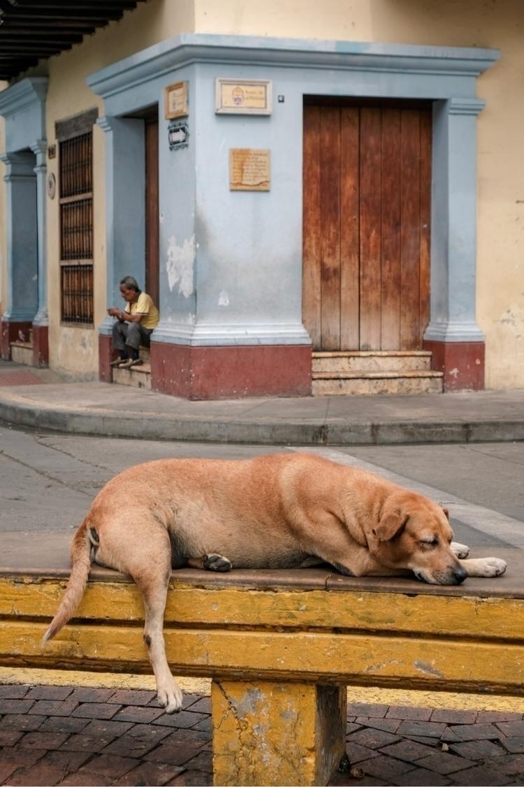 colombia, xt2, xseries, pets - kch | ello