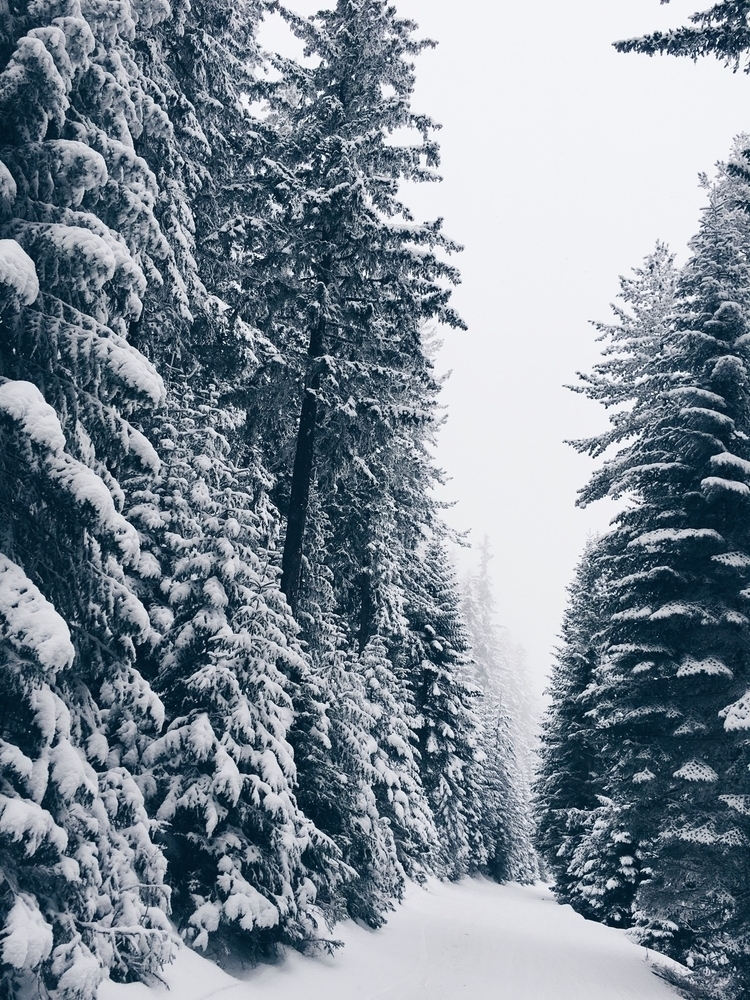 snow, mountain, tree, ski - melkinimages | ello