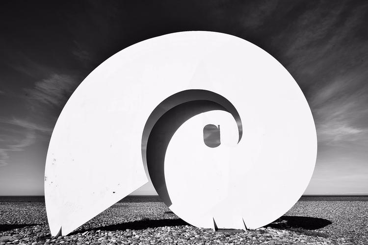 snail, photography - hakans   ello