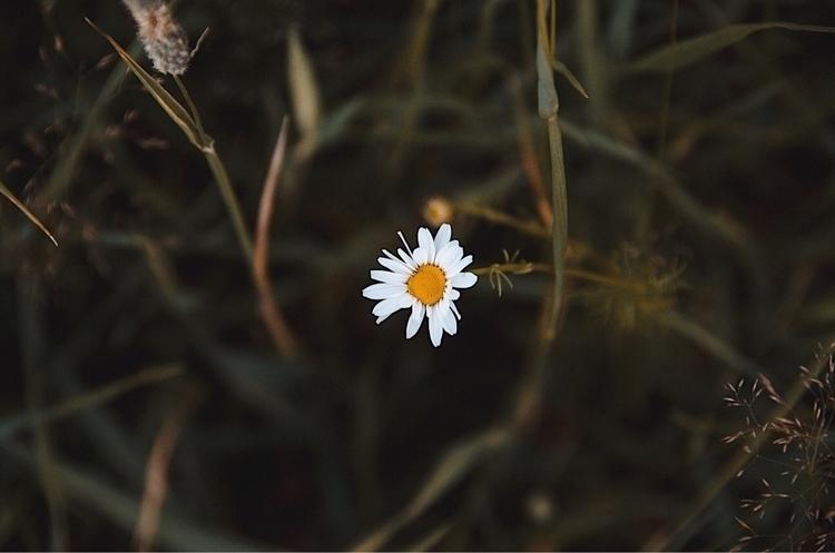 summer - nature, photography - fabianlundkvist | ello
