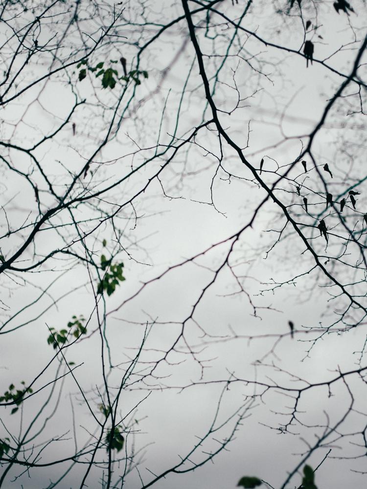 veins nature - ellonew, photography - coniesb | ello