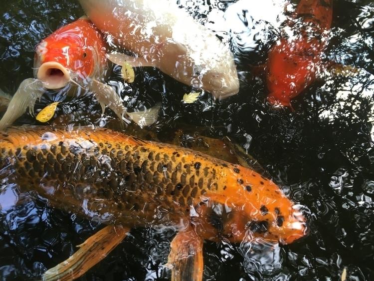 Selections unedited Koi Pond Au - leah | ello