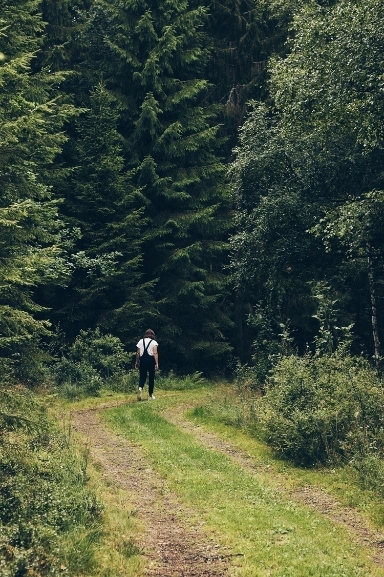 wander, walk, woods, tree, pine - linusake | ello