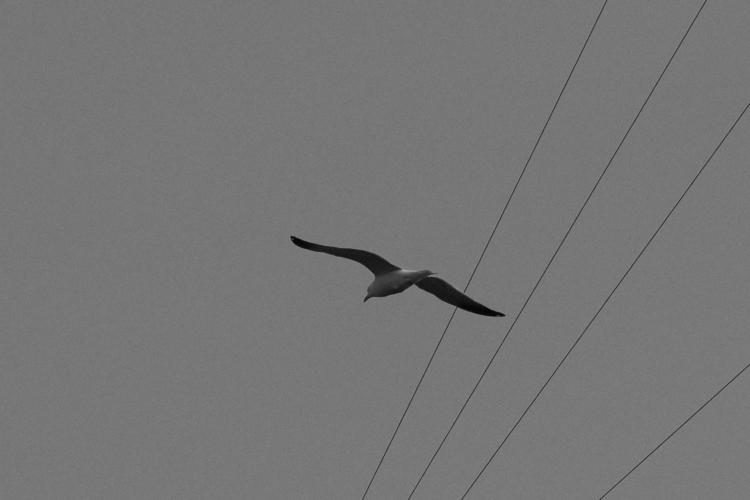 Flight - naturephotography, blackandwhite - berryphillips | ello