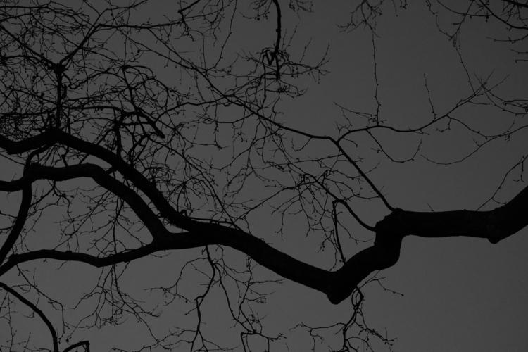 Silhouette tree late-evening sk - berryphillips | ello