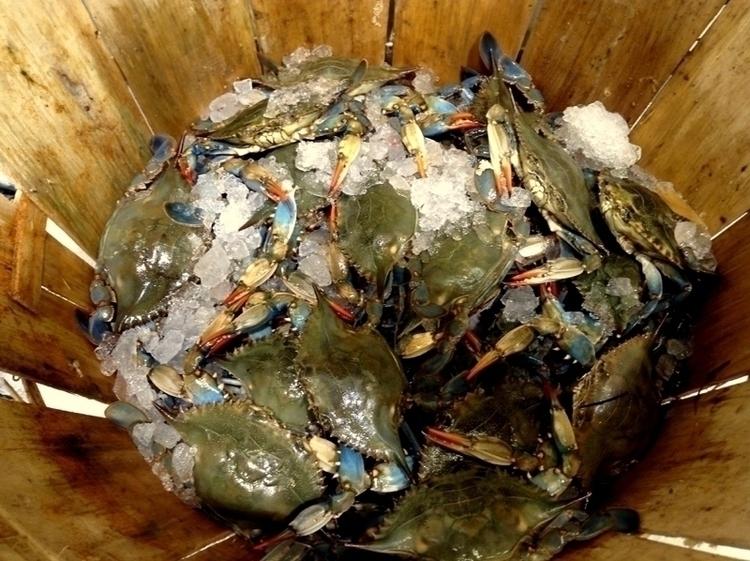 Basket Crabs - photography, blue_orange - dispel | ello
