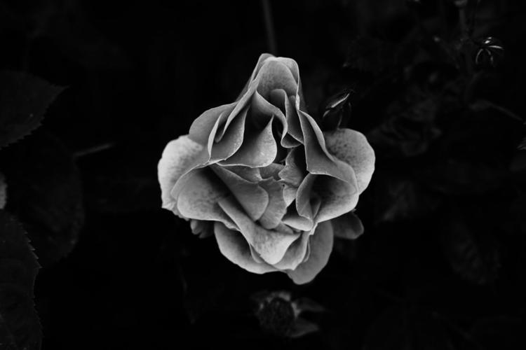 Silence, garden monochrome - blackandwhitephotography - beesucher | ello