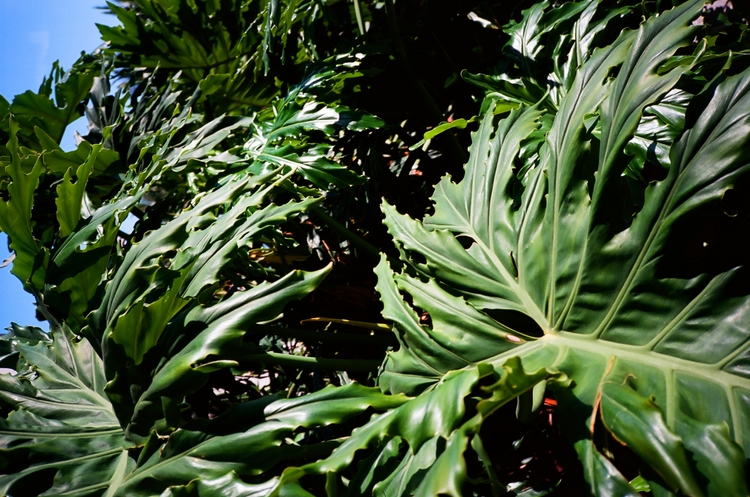 Plants Film Miami - yashicat4, 35mm - oresti | ello