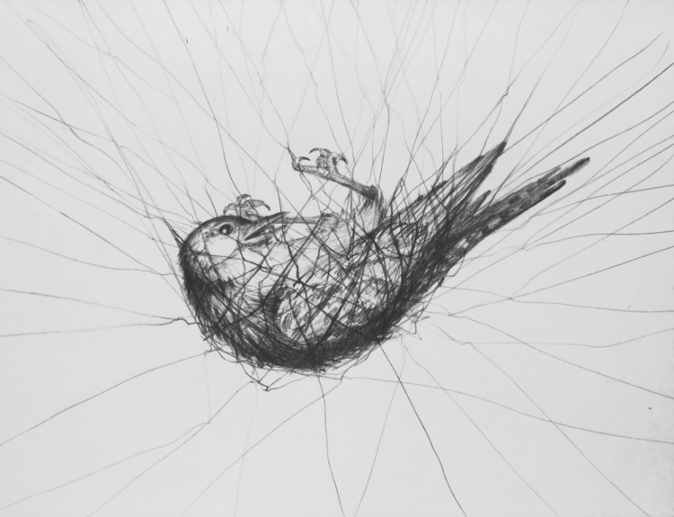 Ello - blackandwhite, pencildrawing - z_v | ello
