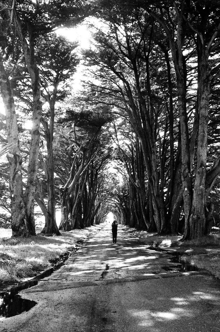 Cypress Tree Tunnel  - blackandwhite - marsprime | ello