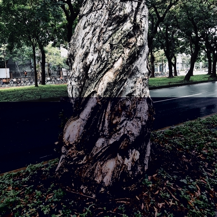 trees - tree, road, wet, rainnyday - bjl710806   ello