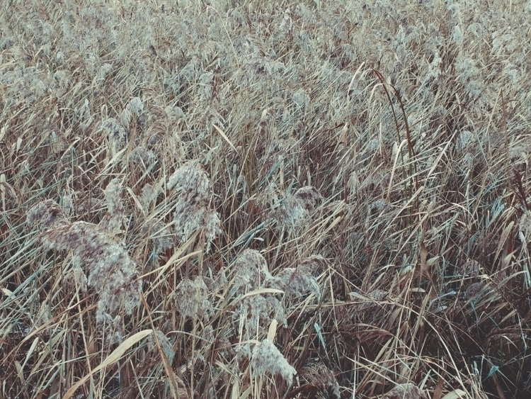 Grass pattern - grass, plants, reeds - andreigrigorev   ello