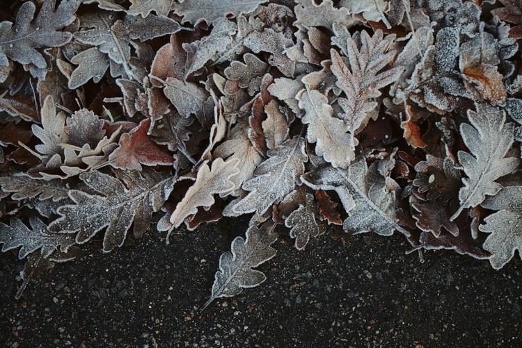 portugal, winter, trasosmontes - joaoalmeida | ello