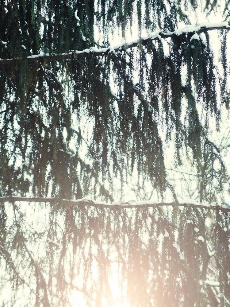 Flare - tree, branches, flare, sunlight - andreigrigorev | ello