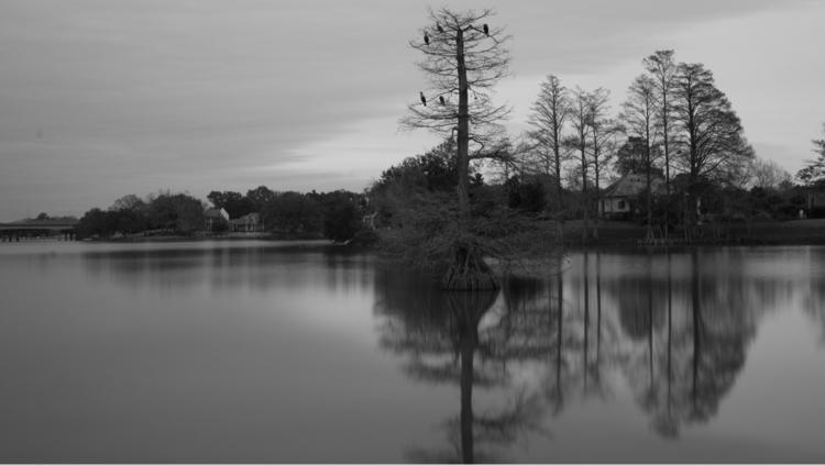 Louisuana art - swamps, bayous, longexposure - shanobi_juan_kanobi | ello