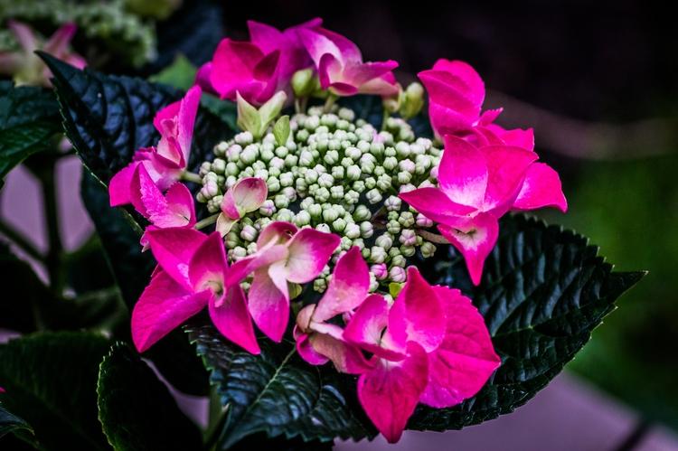 Garden Flower - paweladamski | ello