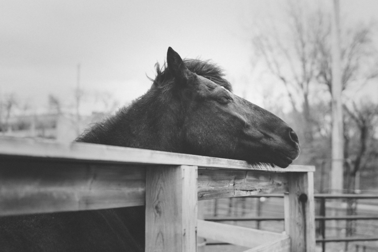 pose  - horse, nature, natureinthecity - melissadupuch-photography | ello